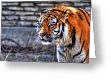 0010 Siberian Tiger Greeting Card