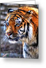 0013 Siberian Tiger Greeting Card