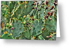 002 For The Cactus Lover In You Buffalo Botanical Gardens Series Greeting Card