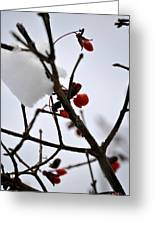 002 Frozen Berries Greeting Card
