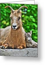 002 Nap Time At The Buffalo Zoo Greeting Card