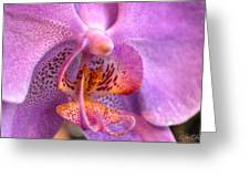002 Orchid Summer Show Buffalo Botanical Gardens Series Greeting Card