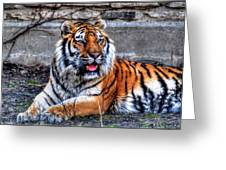 003 Siberian Tiger Greeting Card