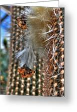 004 For The Cactus Lover In You Buffalo Botanical Gardens Series Greeting Card