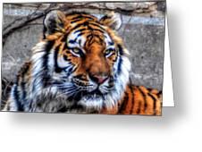 004 Siberian Tiger Greeting Card