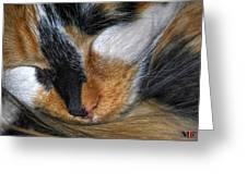 0053 Sleeping Cleo Greeting Card
