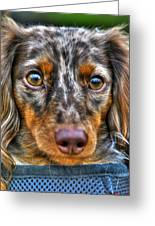 0054 Puppy Dog Eyes Greeting Card