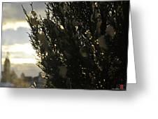 006 Peaking Winter Sunrise Greeting Card