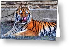 006 Siberian Tiger Greeting Card