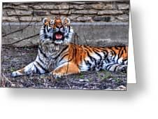 007 Siberian Tiger Greeting Card