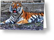 008 Siberian Tiger Greeting Card