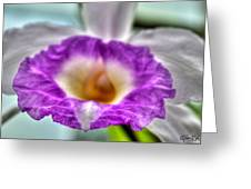 00b Buffalo Botanical Gardens Series Greeting Card