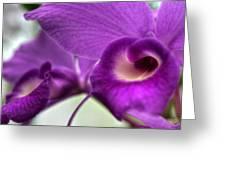 00c Buffalo Botanical Gardens Series Greeting Card
