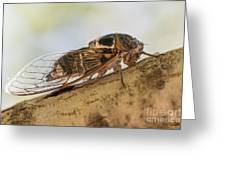 01 New Forest Cicada  Greeting Card