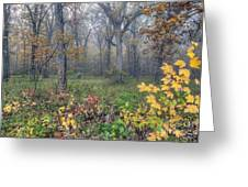0133 Misty Meadow 2 Greeting Card