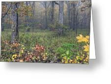 0134 Misty Meadow Greeting Card