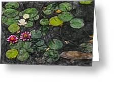 0148-lily -  Synchro Sl Greeting Card