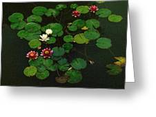 0151-lily -  Colored Photo 1 Greeting Card
