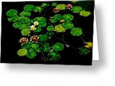 0151-lily -  Pastel Chalk 1 Sl Greeting Card