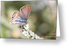 02 Long-tailed Blue Butterfly Greeting Card