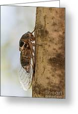 02 New Forest Cicada  Greeting Card
