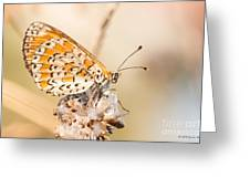 03 Lesser Spotted Fritillary Greeting Card