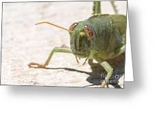 04 Egyptian Locust Grasshopper Greeting Card