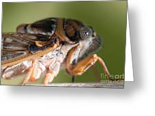 04 New Forest Cicada  Greeting Card