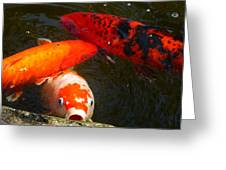 044 Koi Looks For Treats Greeting Card