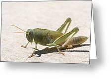 05 Egyptian Locust Grasshopper Greeting Card
