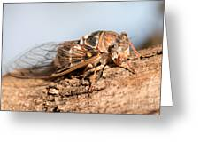 05 New Forest Cicada  Greeting Card