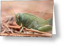 08 Egyptian Locust Grasshopper Greeting Card