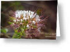 08.03.14 Palo Duro Canyon - Comanche Trail 117e Greeting Card
