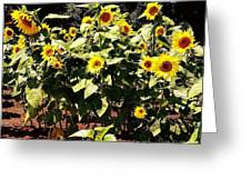 08252013038 Greeting Card