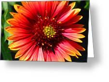 094redishyellowflowersg Greeting Card