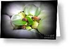 1 . 2 . 3 . Honeybees Greeting Card