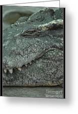 Croc Greeting Card