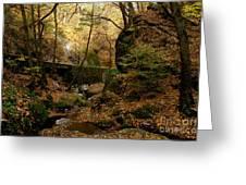 Forest Greeting Card by Odon Czintos