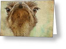 Ostrich Closeup Greeting Card