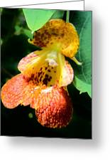 Spotted Jewelweed Greeting Card