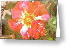 4th Of July Rose Greeting Card