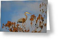 7- Great Blue Heron Greeting Card