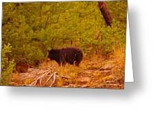 A Black Bear Greeting Card