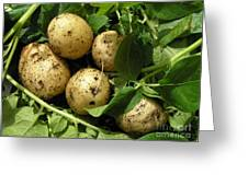 A Bunch Of Fresh New Potatoes Greeting Card