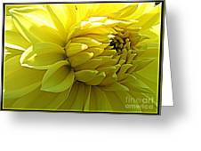 Golden Dahlia Greeting Card