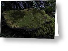 A Moss Covered Stone Inside The National Orchid Garden In Singapore Greeting Card