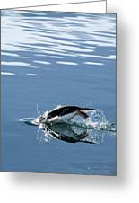 A Penguin Swims Through The Clear Greeting Card