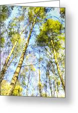 A Quiet Forest Greeting Card