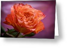 A Rose For Saturday Greeting Card