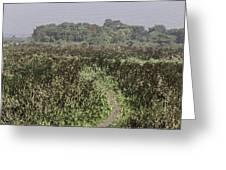 A Small Path Through Very Tall Grass Inside The Okhla Bird Sanctuary Greeting Card
